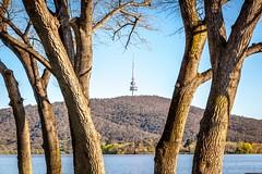 Lake Burley Griffen Trees-2 (Quick Shot Photos) Tags: act australia canberra canon floriade nsw theresa yarralumla australiancapitalterritory au