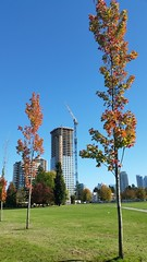 Aldynne  - construction Oct.11  2016 (D70) Tags: burnaby bc 15 floors building by polygon for their new apartment residences 5808 patterson avenue canada will be 37 stories with 242 units aldynne construction oct11 2016
