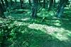 DSC02685 (Nai.) Tags: sonyrx100 taiwan taichung asia nature plants trees treeporn green greenness pine pinewoods lights shades