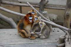 Family portrait (ray2pixel) Tags: monkey nikon korea themepark everland 2014 d610