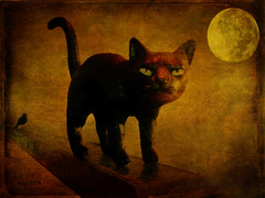 Prowling by Moonlight (etva101) Tags: moon texture halloween cat photomanipulation hypothetical