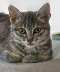 Mil 3 (ansacariofoto) Tags: cats nature animals tokina gatti animali hdr tokina100mmf28atxprod nikond5000