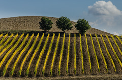 Autumn colors (hjuengst) Tags: italien autumn italy tree clouds vineyard italia day herbst tuscany bume unescoworldheritage weinberg toskana valdorcia sanquiricodorcia nikond7000 pwpartlycloudy