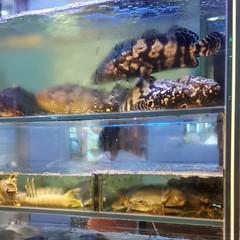 ปลา ปู มีให้กินยันฉลามอ่ะ