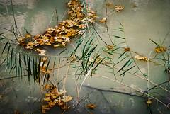 Agua, hojas y ramas - EXPLORER 17/11/14 (Nati Almao1) Tags: hojas canal agua