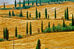Val d Orcia 11 (clodio61) Tags: road trees italy heritage nature field landscape countryside hill unesco wires tuscany winding siena poles typical uphill cypresses slope orcia characteristic