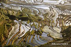 Terrace farms - Yuanyang, Yunnan (Pic_Joy) Tags: china asia village terrace farm unescoworldheritagesite  yunnan ethnic minority  hani     honghe duoyishu