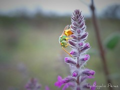 Whats up! (ropemi) Tags: macro nature zoom bees insects bee 1300views 1500views 100favorites
