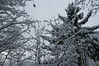 snow on branches in winter (Maria_Johnsen) Tags: winter lake norway snowy branches trondheim norse jonsvatnet snowybranches snowylake