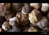 Ceps!!!! (PCB75) Tags: mushroom mira foret seta ceps champignon pilz boletus setas bosc magia cep гриб ondo bolets bolet schwammerl boletusedulis sureny 蘑菇 onddo cogordo madeirudo cigró màgic μανιτάρι goita siureny setadeburdeos hongocalabaza mollerol caperó fongonegro ontobeltza