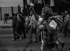 DSC_0087 (diana.garciapina) Tags: bw blancoynegro mxico libertad mexicocity df december flor protesta reforma marcha distritofederal cempaschil represin presospolticos ayotzinapa sinviolencia 1diciembre fueraepn nosfaltan43