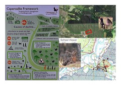 Planning to protect habitat for capercaillie (Tetrao urogallus) (BSCG (Badenoch and Strathspey Conservation Group)) Tags: sw cp
