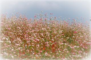 IMG_0045_flowers