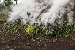 Making charcoal, Port Salut, South Department, Haiti (UNEP Disasters & Conflicts) Tags: haiti csi cotesudinitiative southdepartment environment un sdg mdg drr renewableenergy sustainabledevelopment greeneconomy pcdmb disasters conflicts portsalut disasterriskreduction climatechange deforestation charcoal forestenergy unep unenvironment