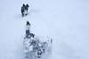 Helios and Yippiii (FrøydisPhots) Tags: dog pet snow playing norway norge hund bordercollie sørtrøndelag snø hunder kjæledyr leker winther vintner romjul berkåk myesnø