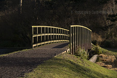 Across to the Dark Side (Photographs by David Hollingworth) Tags: bridge trees sunlight lake fisherman shadows mere woodenbridge pathway angler freshwaterfishing scarboroughmere rodandtackle