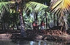 - (txmx 2) Tags: film analog 1974 kerala indien backwaters ignorethetagsonwhitetheyarefromastupidflickrrobot