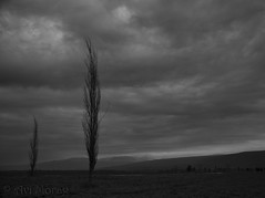 Northern Israel 1 (Avi Morag) Tags: israel hula valley 2015 mounthermon   hulavalley avimorag