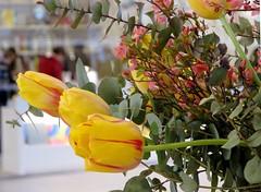 Vuitton center (manu/manuela) Tags: flowers paris france fleurs desk entrance fiori vuitton luxe louisvuitton boisdeboulogne halldentre fondationlouisvuitton