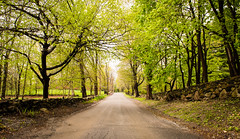 20160508 (Homemade) Tags: road trees ny newyork green spring dirtroad westchestercounty lewisboro waccabuc nikkor2470mmf28 nikon2470mmf28
