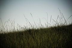 #228 of 365 days - Autumn Field (Ruadh Sionnach) Tags: ranch sky naturaleza nature field grass dark woods close darkness natural farm natureza fields celtic druid paganism rancho pagan druidism