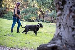 DSC_4255 (lauripiper) Tags: california park portrait woman dog girl mutt rottweiler pitbull amstaff americanstaffordshireterrier nikond810