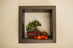 365-15 Within the Square (Daniel A Ruiz) Tags: wall project square nikon df bokeh details small pumpkins mount ornament bonsai 365 58mn