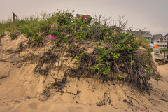Ocean Grove Dune-1 (Visual Thinking (by Terry McKenna)) Tags: ocean park grove nj shore jersey asbury