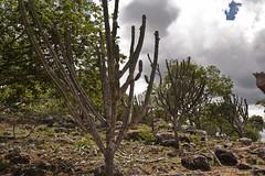 Paisagem do semi rido (brasildagente) Tags: paisagem eds prefs semirido