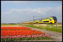 NSR-9551+8635_Hil_04052016 (Dennis Koster) Tags: ns bollen trein tulpen nsr hillegom 8635 9551 personentrein passagierstrein 2275asdddr