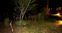 IMG_8642 (jalexartis) Tags: lighting nightphotography night yard dark landscape lights backyard landscaping shrub yucca shrubbery yuccaplant