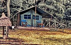 Safari Masai Mara Governor's Lodge (gerard eder) Tags: world travel reise viajes africa eastafrica easternafrica ostafrika kenia kenya safai masaimara wildlife animals outdoor camp governorslodge nature natur landscape landschaft paisajes