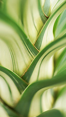 Yucca plants (judith511) Tags: plants green yucca naturethroughthelens