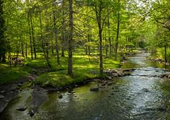 Geyser Creek, Saratoga Springs, NY (Diacritical) Tags: iso800 saratogasprings 35 f95 0ev summiluxm11435asph centerweightedaverage leicacameraag sec geysercreek secatf95 leicamtyp240 may252016 douglascpalmer2014