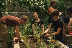 HarlemGrown-23 (United Nations International School) Tags: school students gardening farming volunteer unis composting harlemgrown