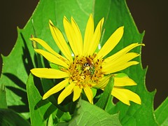 IMG_5328 (kennethkonica) Tags: life light summer usa color macro green nature yellow america canon insect leaf midwest shadows close bright random outdoor indianapolis magic vivid indy indiana serenity serene pause moods global hoosiers canonpowershot marioncounty inthemoment