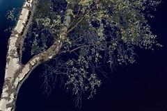 heide birke (fdfotografie) Tags: flora ast outdoor pflanze surreal himmel grn blau tageslicht dslr blatt bltter heide birke sonnenschein ausschnitt weis zweig expressiv farbfoto querformat falschfarben expressionistisch d7100 expressivebearbeitung