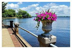 Petunnias (Jim Atkins Sr) Tags: flowers urn river nc sony northcarolina neuse neuseriver newbern newbernnc petunnia riverneuse sonya58 councilbluffgreen