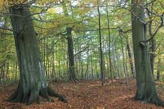 Kadyny, Warmia, Poland (LeszekZadlo) Tags: wood autumn trees green fall leaves yellow landscape paisaje landschaft wald warmiaermlandpolskapoloniapolognepolenlightdrzewaeuropeeunaturenaturezanaturaleza