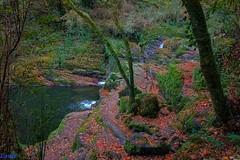 (loriagaon) Tags: autumn plants paisajes naturaleza tree nature water ro river landscapes agua scenery plantas stones varios rbol otoo piedras loria sonydscrx10 loriagaon