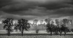 Landscape No. 8164 BW (Knipser31405) Tags: bw landscape 2014