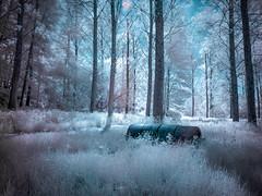 La clairière à la bonbonne (stef6.photo) Tags: landscape ir infrared paysage infrarouge féérie magicallandscape 720nmfilter filtrehoya72 filtre720nm