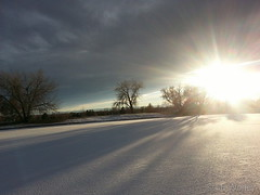 November 18, 2014 - Thornton parks under a layer of snow. (LE Worley)