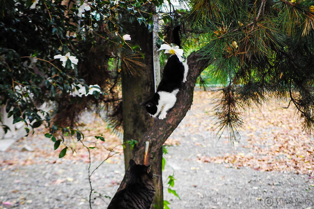 Today's Cat@2014-11-22