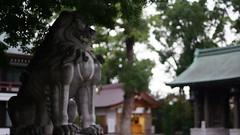 (teruw0teruw0) Tags: japan garden japanese daylight nikon shrine dof bokeh sony september  nikkor shinto kanagawa  japon classiclens   2014 japn nex 9 shintoism   samukawa japonia  oldlens  bokehandbeyond emount nex5r  sony0mmf00 kouzagun