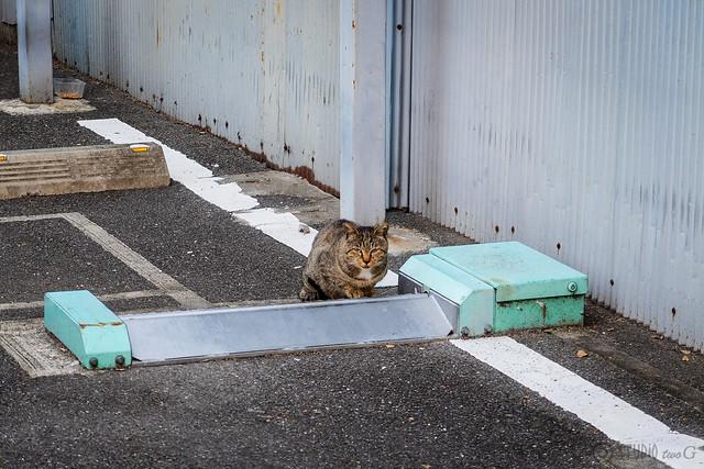 Today's Cat@2014-11-01