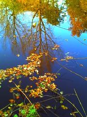 Mühlenteich (Der Ohlsen) Tags: autumn colour digital germany deutschland herbst schleswigholstein schenefeld mühlenteich harinezumi30