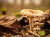 Mushrooms (David Cucalón) Tags: autumn naturaleza macro fall nature forest 35mm mushrooms warm natura olympus bosque desenfoque otoño setas bosc tardor 2014 bolets calido e510 cucalon calid booken davidcucalon