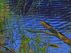 Abstract Waterside (maginoz1) Tags: nov abstract canon spring flora australia victoria waterside 2014 g16