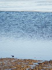 / spring (svraskin_k) Tags: lake nature landscape countryside spring russia russian    waterreservoir  smallbird  moscowregion     micro43 olympuszuikoom100mmf28  vitenevo olympusomdem1